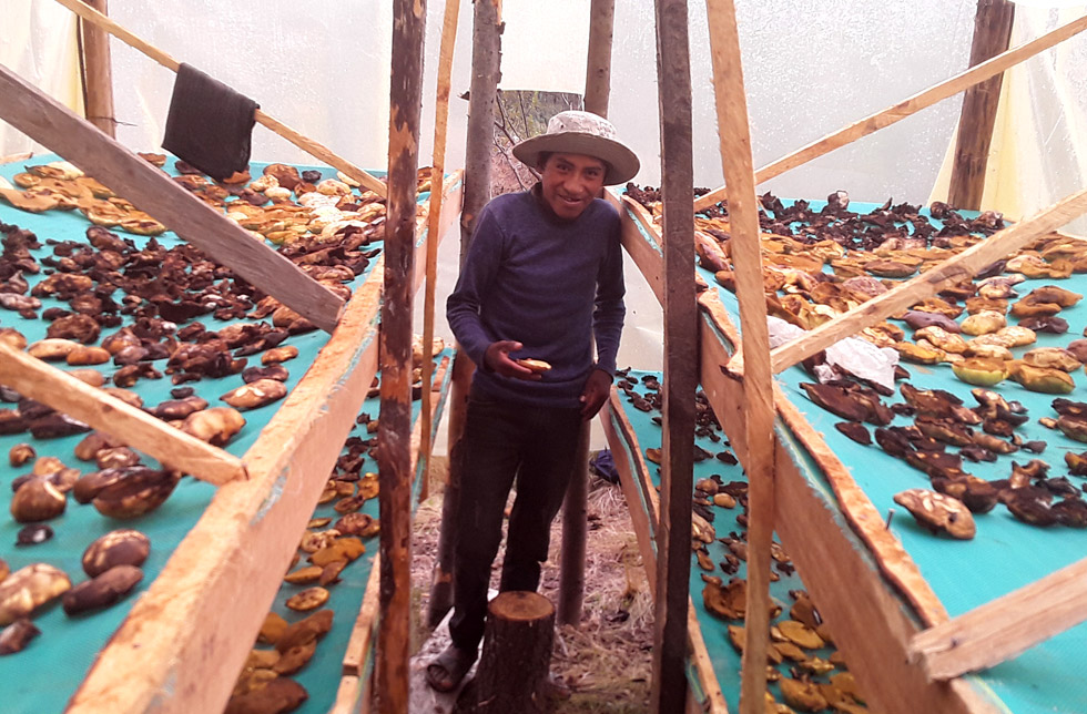 Bolivien: Ein Mann steht zwischen einfachen Holzgestellen, auf denen Pilze zum Trocknen ausgebreitet sind.