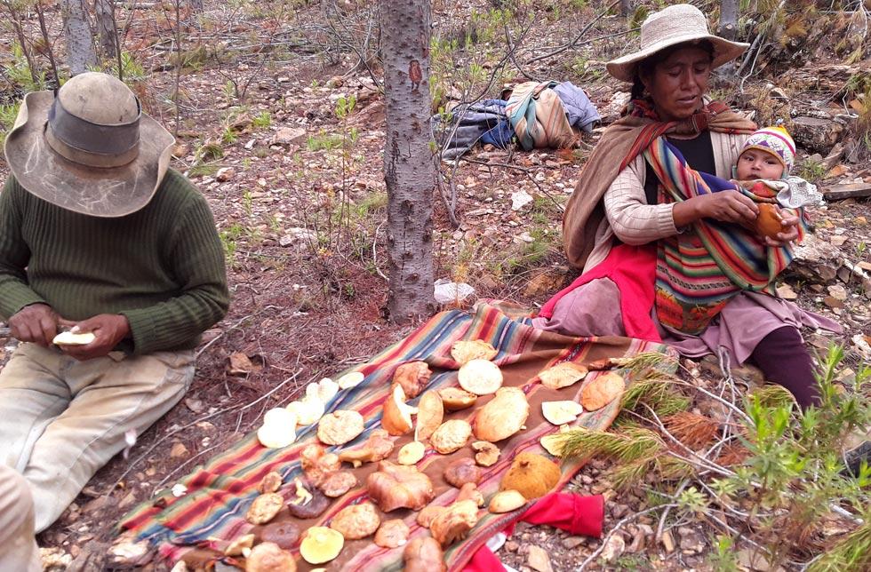 Bolivien: Eine Familie sitzt neben einem Tuch mit Pilzen und schält sie.