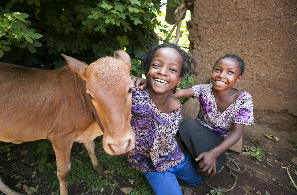 Äthiopien: Zwei kleine Mädchen spielen mit einem Kalb.